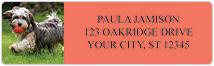Havanese Address Labels